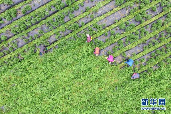 又是一年春风起 摄影师拍摄田间地头春忙图