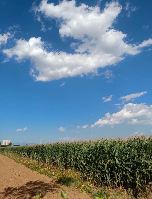 魅力临汾也有了蓝天白云——猎奇摄影作品